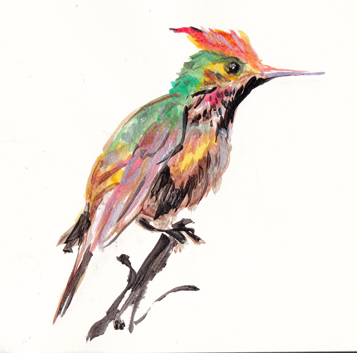 short crested coquette paint s