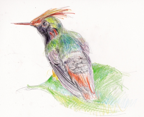 short crested coquette pencil s