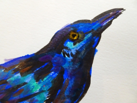 grackle close up s