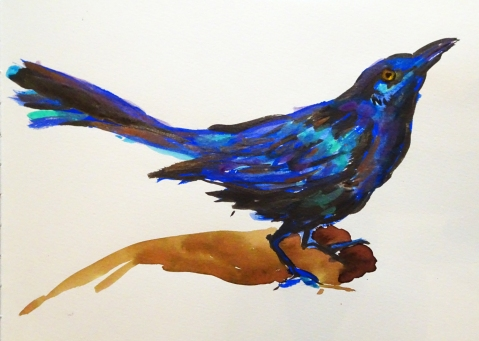 grackle photo s