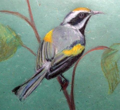 golden warbler 2s
