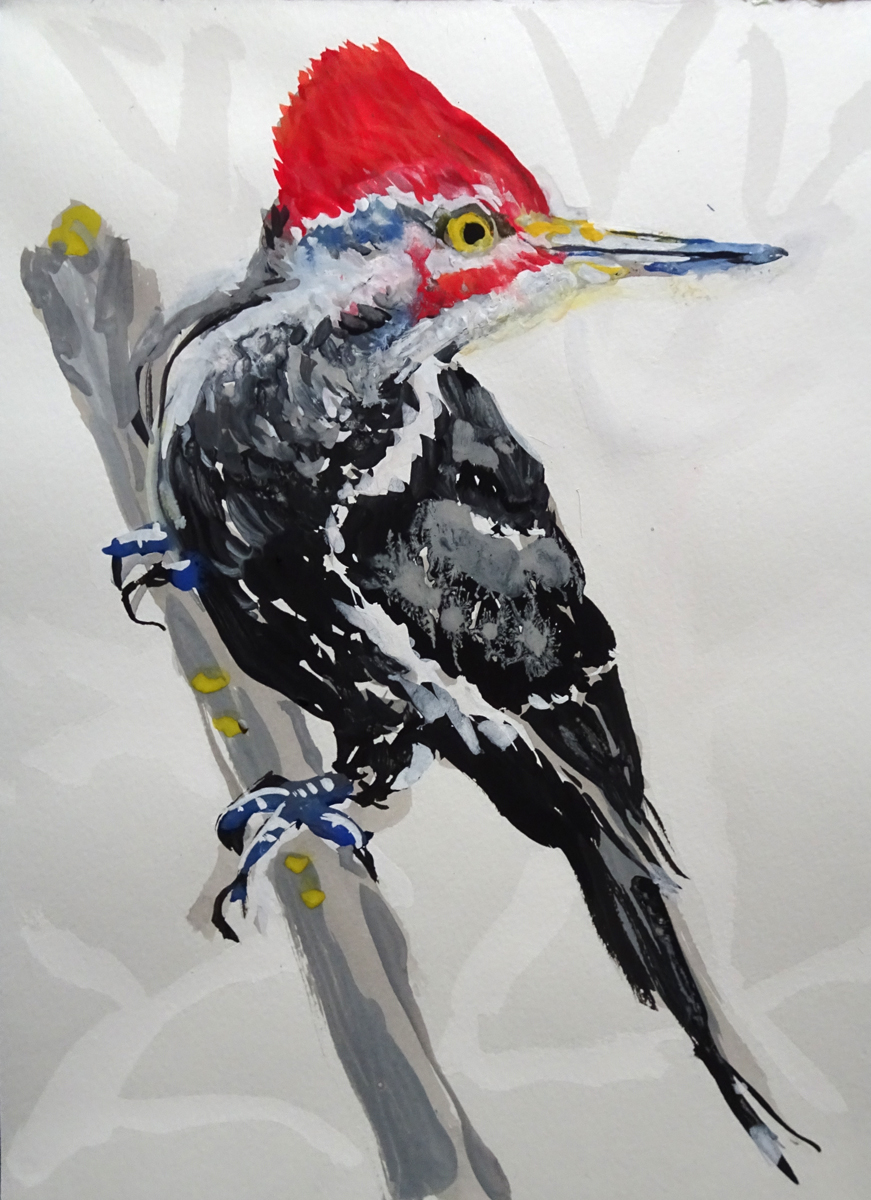 pileated woodpecker s
