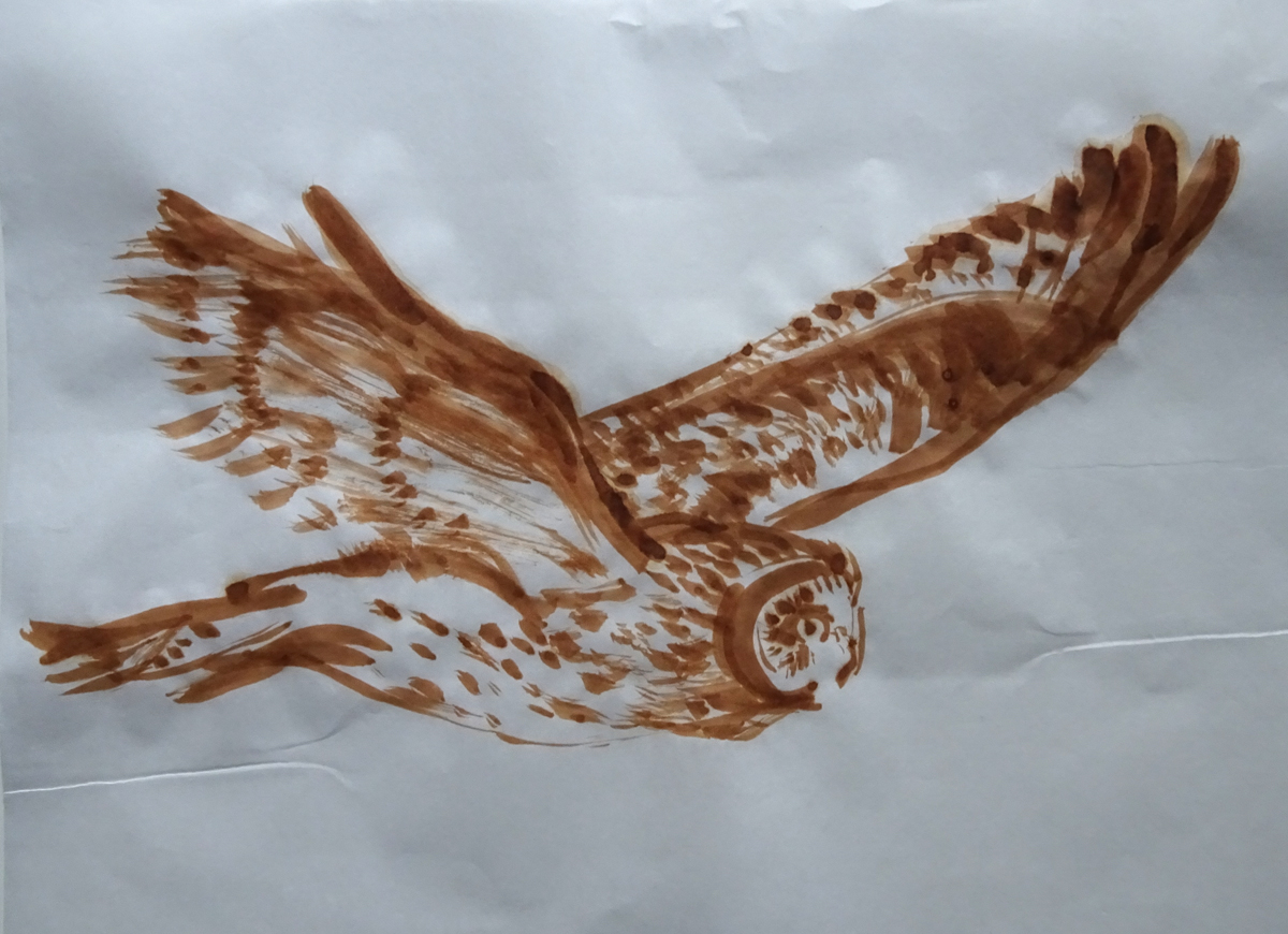 flying owl photo s