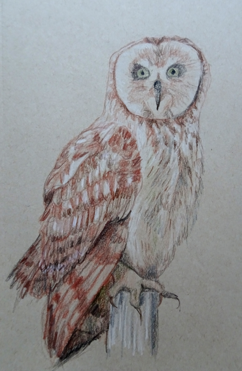 owl color photo s