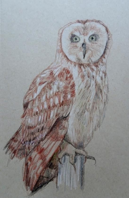 owl color photo s