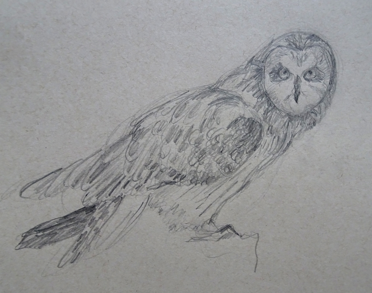 pencil owl photo s