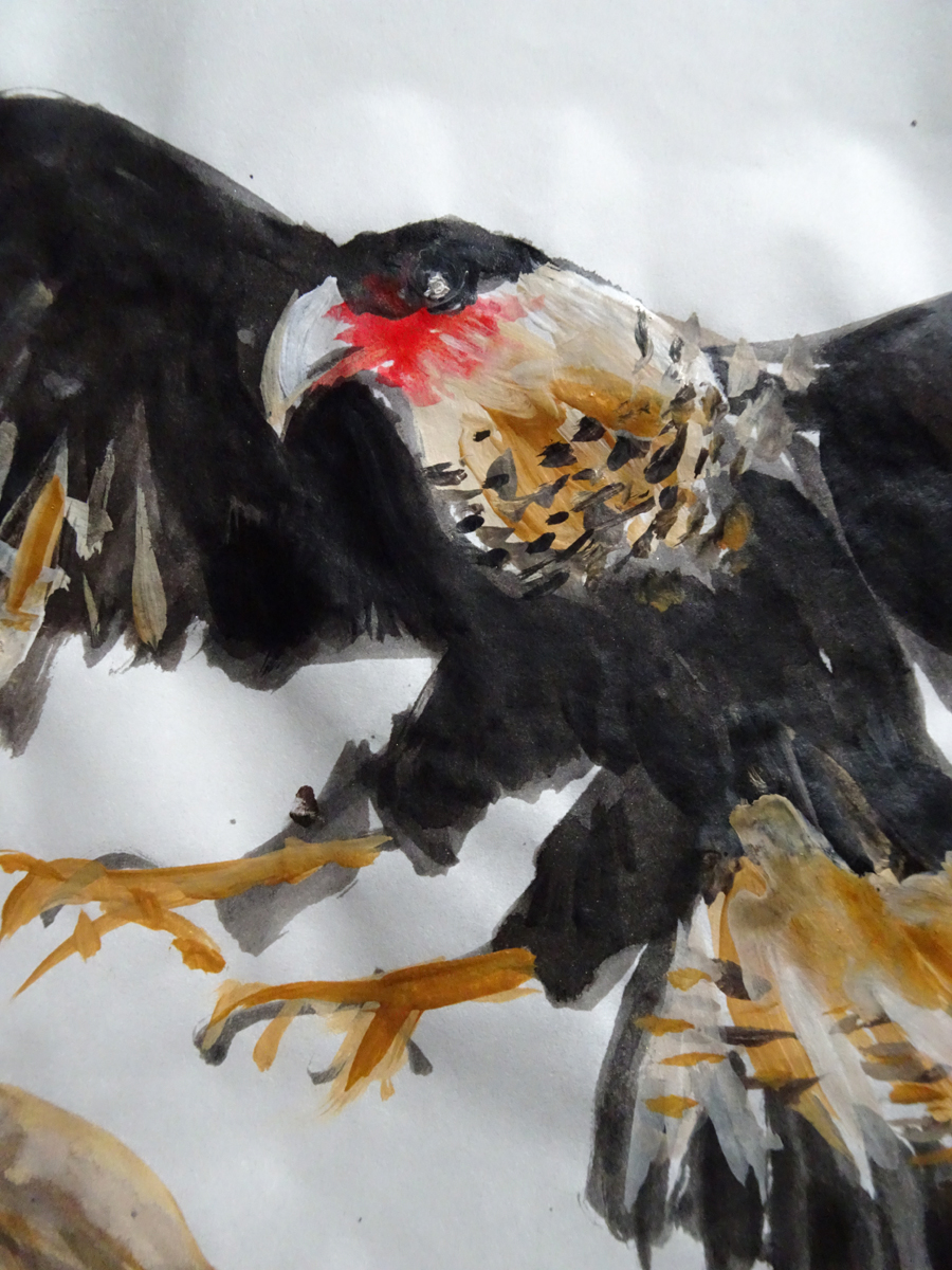 crested caracara close up s