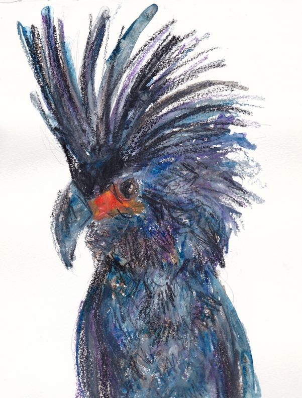 black cockatoo scan s