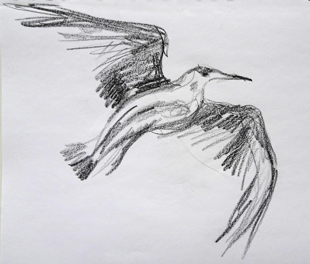 seagull 1s
