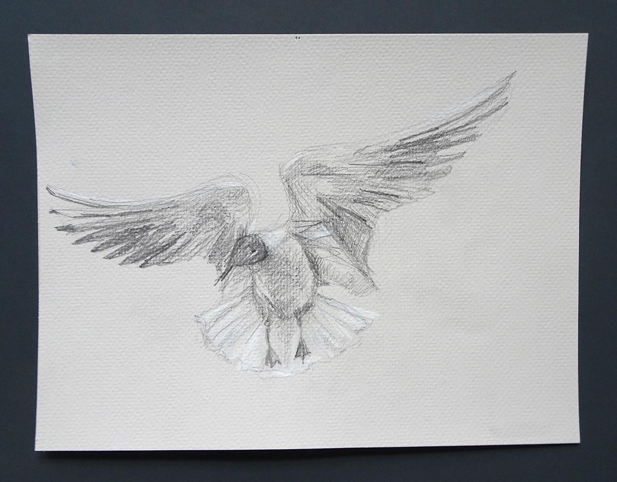 seagull 2s
