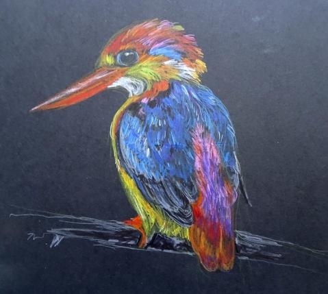 dwarf kingfisher blk s