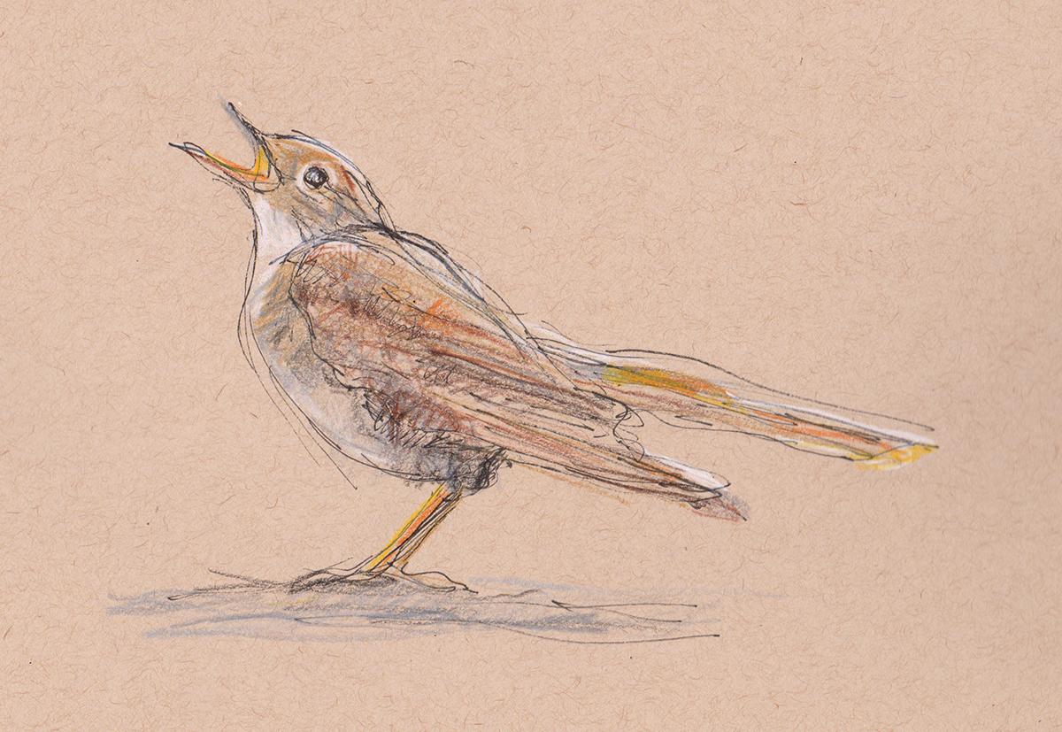 nightingale 1s