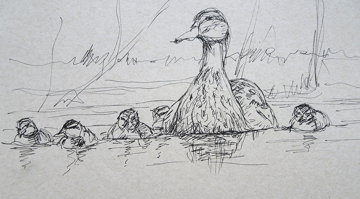 ducklings drawing s